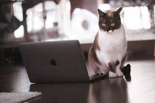 cat126IMGL6393_TP_V.jpg